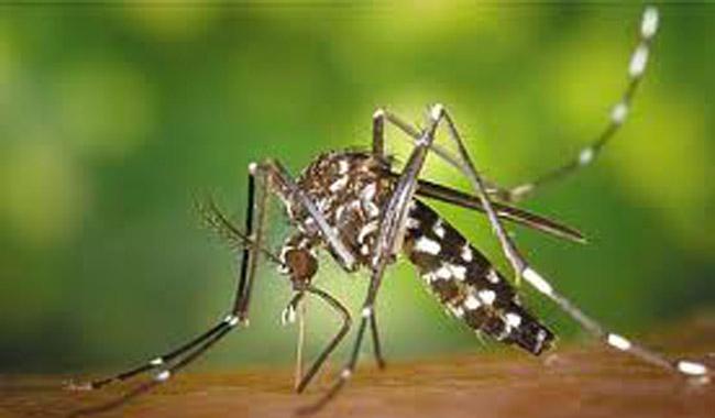 Μπαλάκι οι ευθύνες για την καταπολέμηση των κουνουπιών
