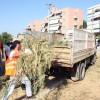 Δεν θα μαζεύει κλαδέματα ως τις 5 Αυγούστου ο Δήμος 3Β