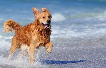 Pet friendly παραλίες έρχονται με νόμο