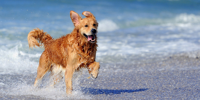Οι pet friendly παραλίες για ανέμελες βουτιές με το σκύλο σας