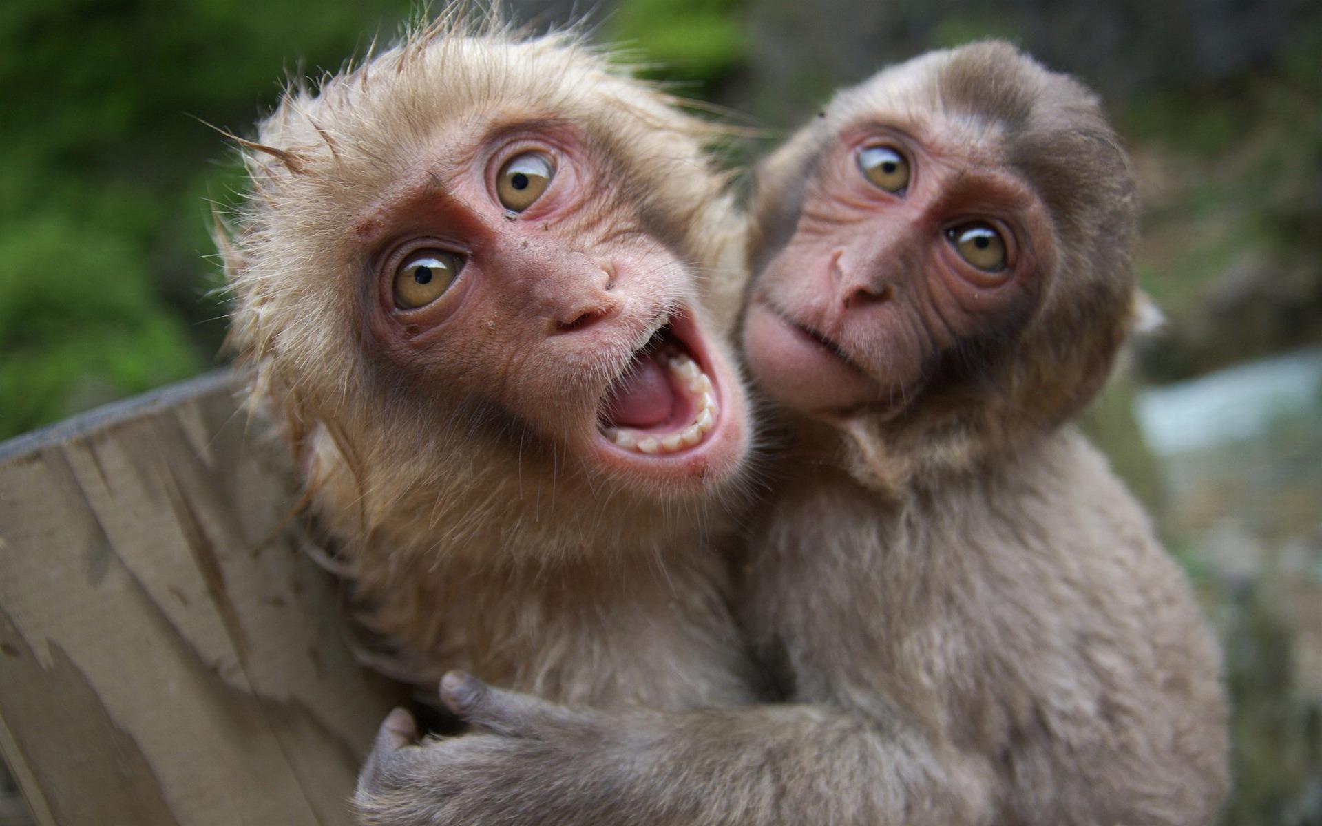Η μαϊμουδοπαρέα του facebook και ο Κωνσταντέλλος