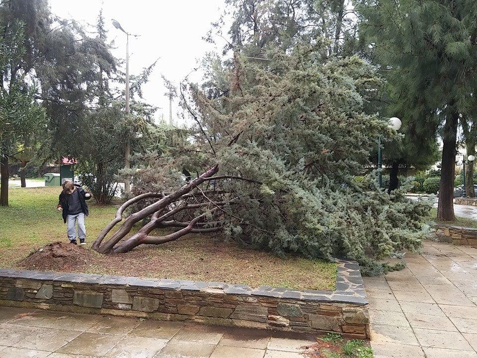 SOS στις υπηρεσίες του Δήμου για το δέντρο που έγειρε στη Βούλα