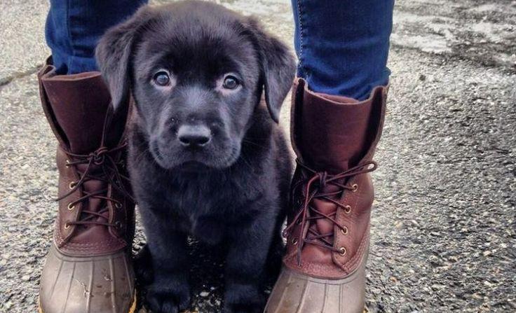 «Δεν πειράζει, μωρέ, σκυλί είναι, όχι παιδί», είπε και το κλώτσησε