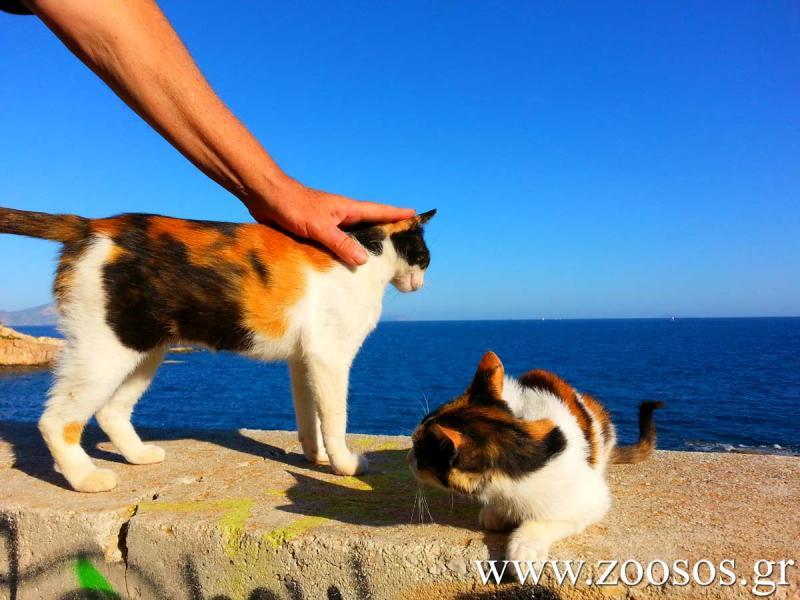 Άστεγος μελετητής του Καβάφη φροντίζει τις γάτες στον Λαιμό της Βουλιαγμένης