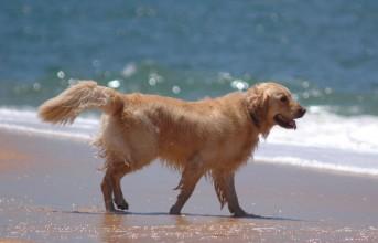 Σκυλιά (και) στις παραλίες: Τι επιτρέπεται