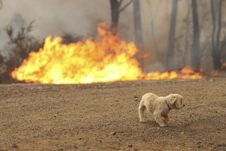 Πανελλήνια έκκληση για τα ζώα - θύματα των πυρκαγιών