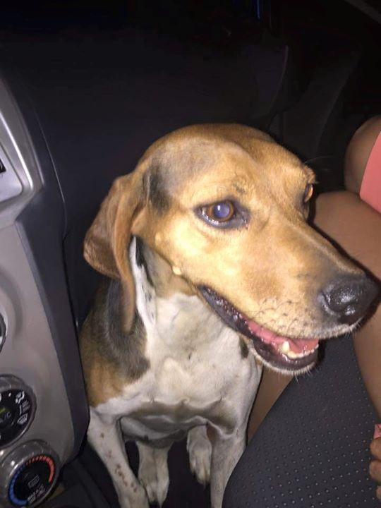 Βρέθηκε σκύλος