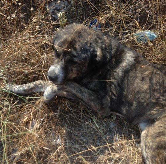 Μήνυση για τον σκύλο που πέθανε αβοήθητος στην Λ. Βάρης