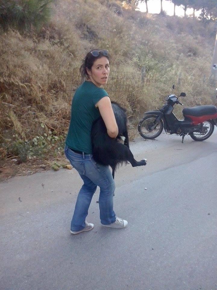 Ζητούνται οχήματα για να μεταφερθούν 35 σκυλάκια