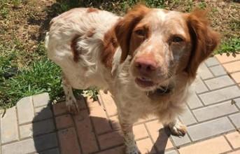 Χάθηκε σκυλίτσα στη Γλυφάδα