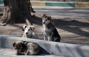 Δωρεάν στειρώσεις αδέσποτων ζώων στο Δήμο Γλυφάδας