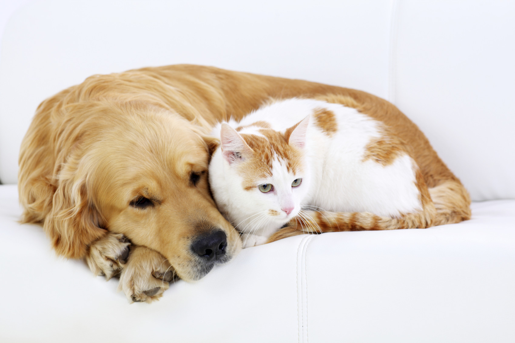 Η νομοθεσία για τα κατοικίδια και τα αδέσποτα ζώα