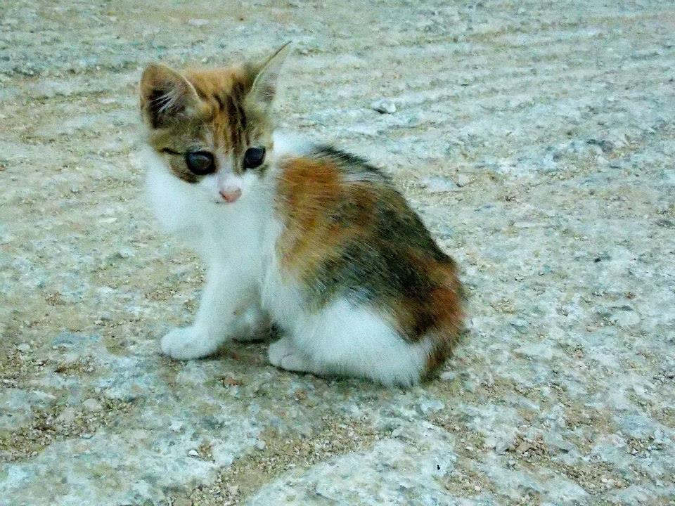 Μικρό γατάκι ζητά βοήθεια