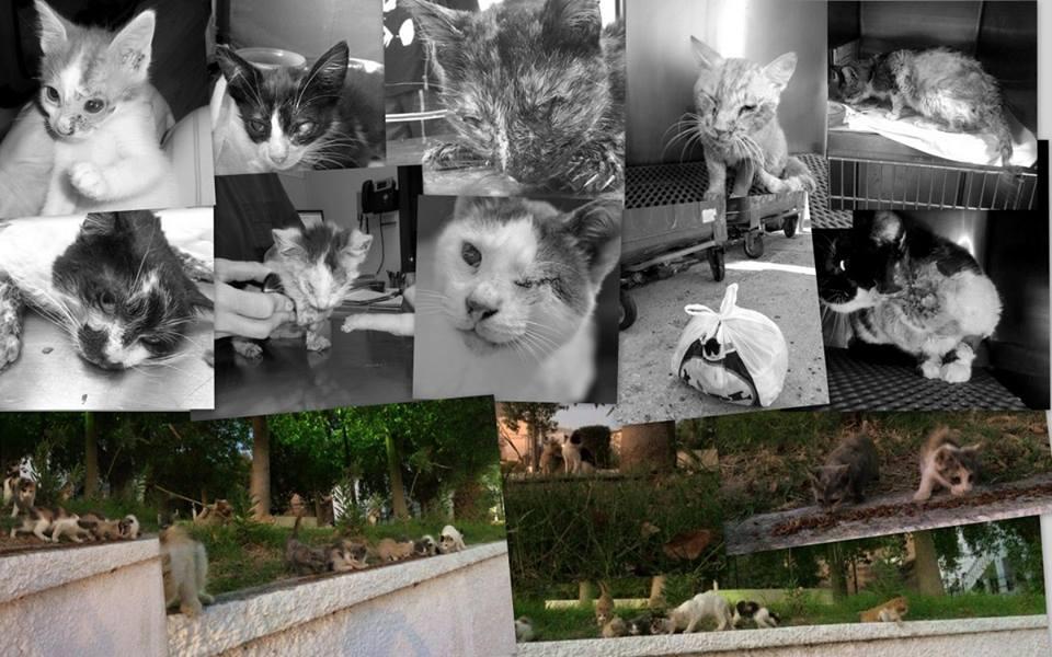 Βοηθήστε την Ζωοφιλική Ηλιούπολης να στειρώσει αδέσποτες γάτες