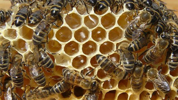 Δωρεάν μαθήματα μελισσοκομίας στο πρώην κάμπινγκ Βούλας