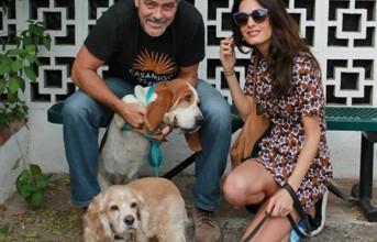 Ο George Clooney υιοθέτησε αδέσποτο σκυλάκι