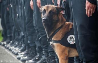Je suis chien: Φόρος τιμής στο αστυνομικό σκυλί που σκοτώθηκε στη Γαλλία