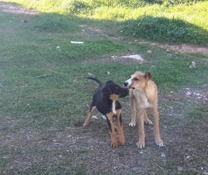 puppiesvari2