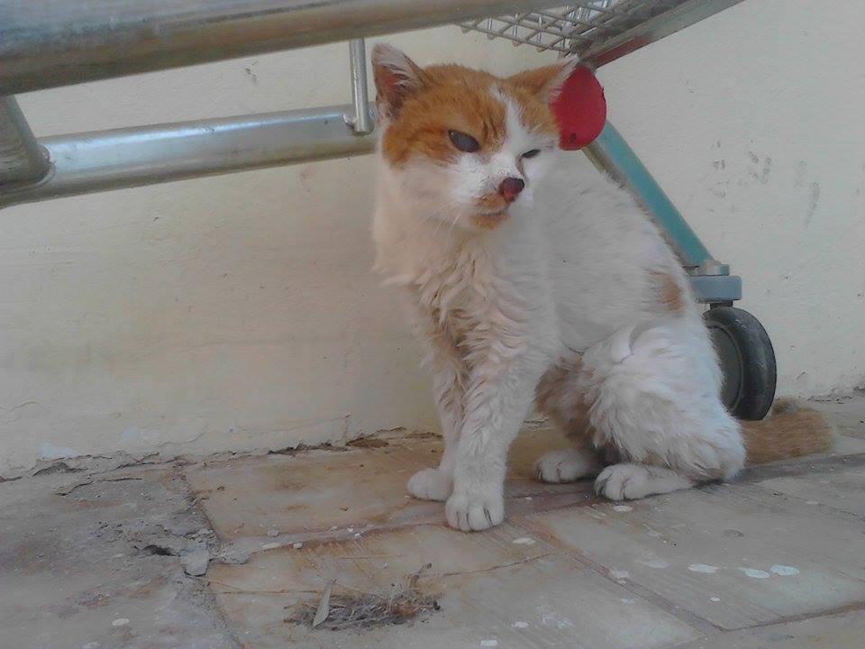 Βρέθηκε ηλικιωμένος γάτος στη Γλυφάδα
