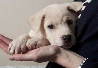 Ερώτηση βουλευτών για τις στειρώσεις αδέσποτων, τα κυνοκομεία, τα pet shops και τα μαθήματα ευαισθητοποίησης