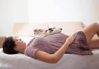 Οι εγκυμονούσες μπορούν να ζουν με γάτα μέσα στο σπίτι