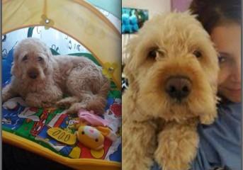 Χάθηκε σκύλος στη Γλυφάδα