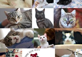 Οκτώ πλεονεκτήματα της υιοθεσίας μιας ενήλικης γάτας