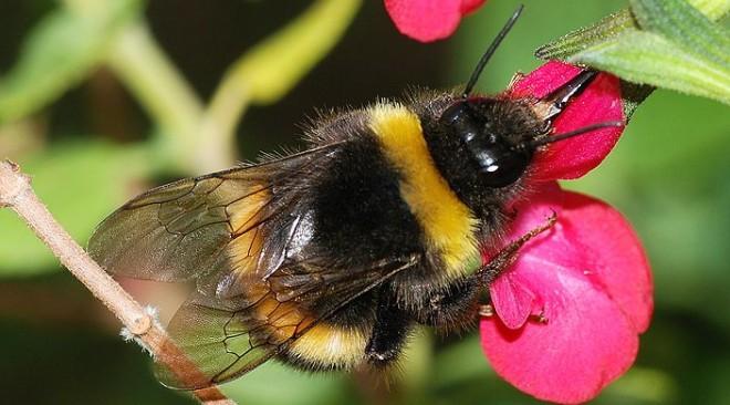 Μελισσοκομικά είδη Apifonda για υγιείς και δυνατές μέλισσες την Άνοιξη