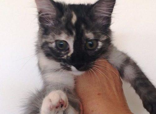 Δύο πανέμορφα γατάκια αναζητούν οικογένειες
