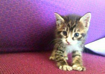 Ένα υπέροχο μικρό γατάκι ζητά οικογένεια