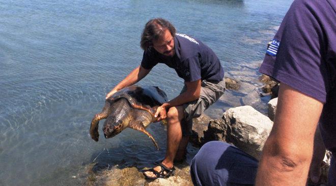 Γίνε εθελοντής διασώστης θαλάσσιων χελωνών στη Γλυφάδα