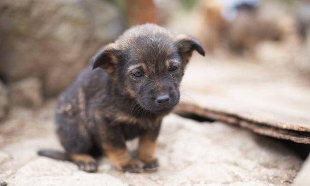 Το Καταφύγιο Αδέσποτων Ζώων ζητά βοήθεια
