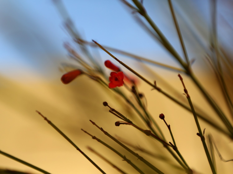 sandy-flower