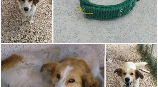 Ποιός έχασε αυτό το σκυλί;