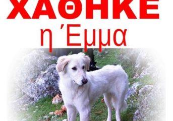 Επείγον, χάθηκε λευκή σκυλίτσα!