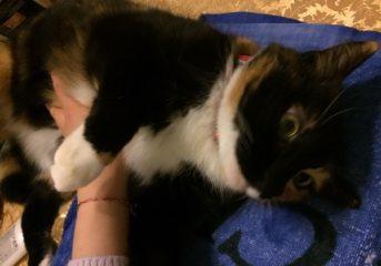 Βρέθηκε σώα μετά από 1 χρόνο γάτα που είχε χαθεί!
