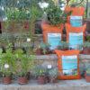 Δωρεάν διάθεση εδαφοβελτιωτικού για κήπους στο Καβούρι