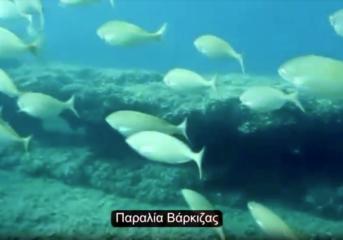 Υποβρύχιες εικόνες από τις ακτές σε Βούλα, Βουλιαγμένη και Βάρκιζα (video)