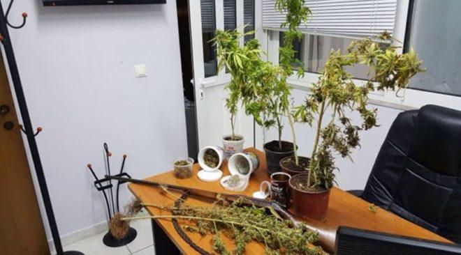 Μια οικιακή φυτεία κάνναβης αποκαλύφθηκε στη Βάρη