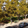 Βουλιαγμένη: Με χορηγία Αστέρα προχωρά η ανάπλαση της πλατείας Νυμφών