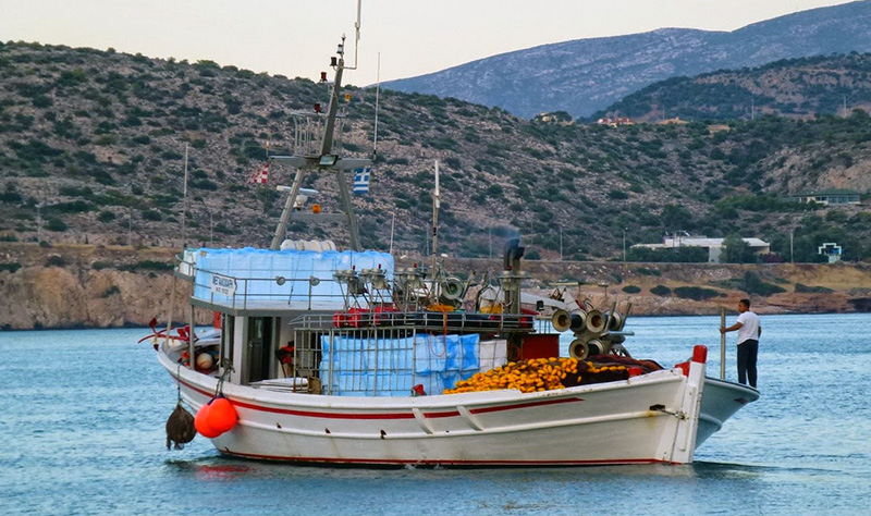 Περιφέρεια Αττικής: Ασφαλή τα νωπά αλιεύματα της Ιχθυόσκαλας