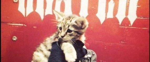 Ο κιθαρίστας των Slayer έσωσε ένα γατάκι από βέβαιο θάνατο