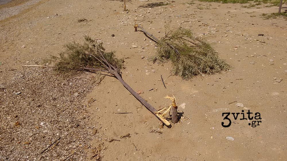 Ποιοι δεν θέλουν αρμυρίκια στην παραλία του Καβουρίου;