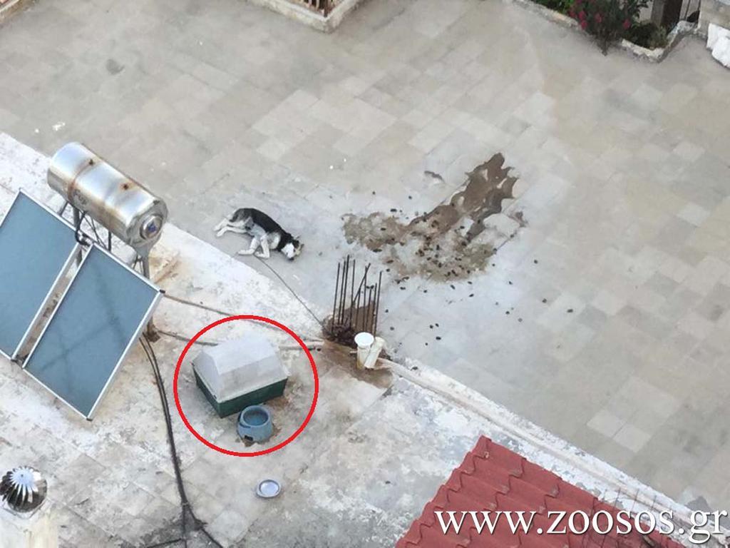 Παραμένει αλυσοδεμένο το σκυλάκι σε μια ταράτσα στην Ηλιούπολη