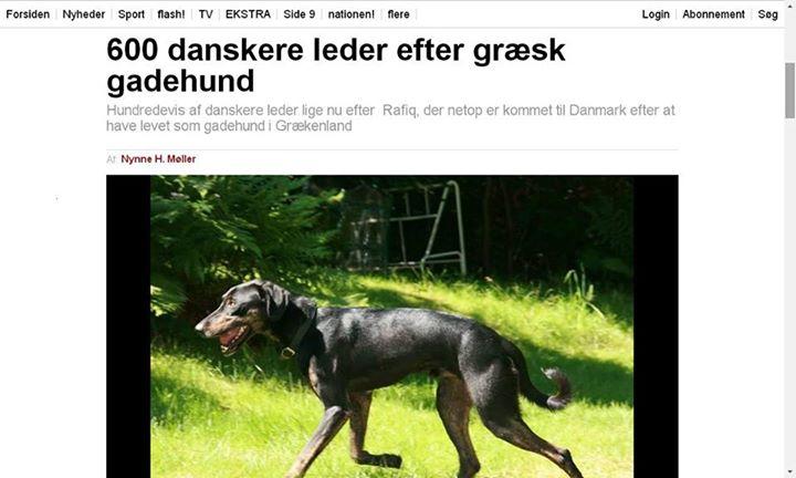 600 Δανοί έψαχναν έναν Έλληνα αδέσποτο σκύλο