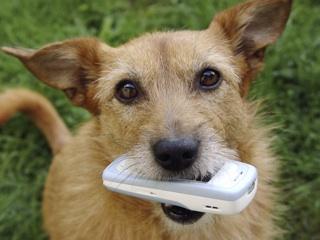Βοηθήστε τα αδέσποτα ζώα με ένα...sms!