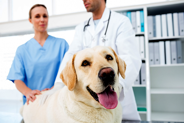 Λεϊσμανίαση: Πώς θα προστατεύσετε το σκύλο σας