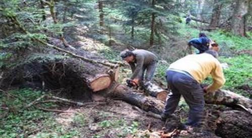 Δασικούς δρόμους στον Υμηττό άνοιξαν εργαζόμενοι και εθελοντές της Γλυφάδας