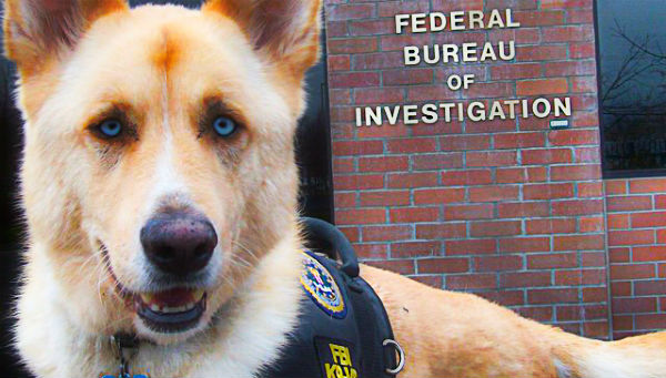 To FBI κατατάσσει πλέον την κακοποίηση ζώων στα κακουργήματα