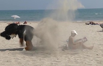 Ξεκαρδιστικό video με ...γιγαντιαίο σκύλο-πειραχτήρι